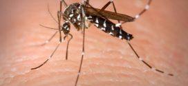 Aunque los Contagios por Dengue  Redujeron, Jalisco Concentra Más de Diez Mil Afectados y 25 Decesos: SSJ