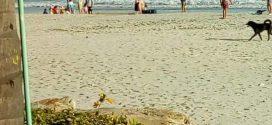 Instala Nayarit Cerco Sanitario en Desarrollo Turístico Los Veneros en Punta de Mita
